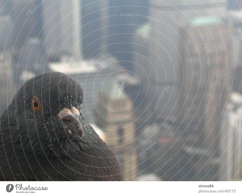 Citybird Tier Vogel Perspektive Aussicht Amerika New York City Nordamerika