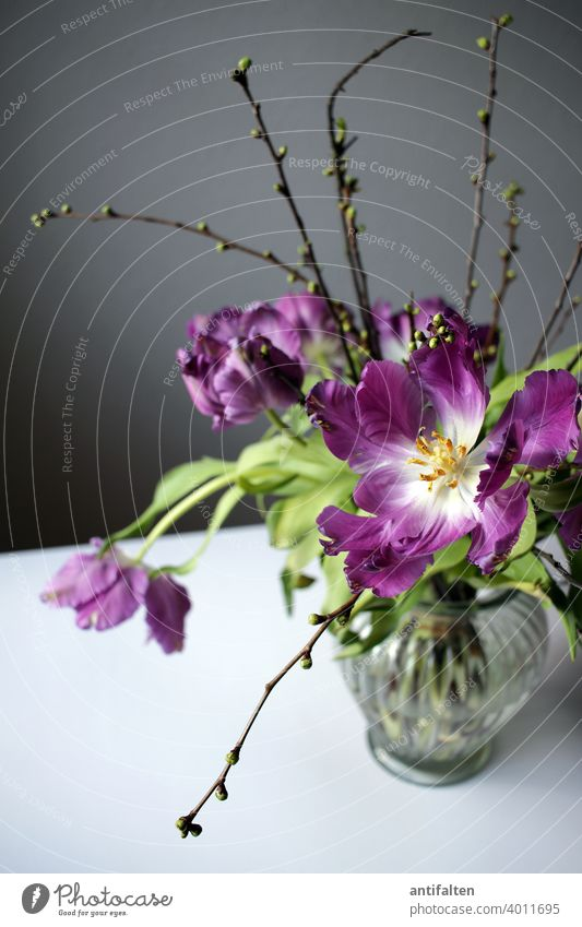 Strüßje Tulpen Blumenstrauß Vase Frühling Blüte Innenaufnahme Pflanze Dekoration & Verzierung Farbfoto Blühend Natur Menschenleer schön Nahaufnahme Blatt Tag