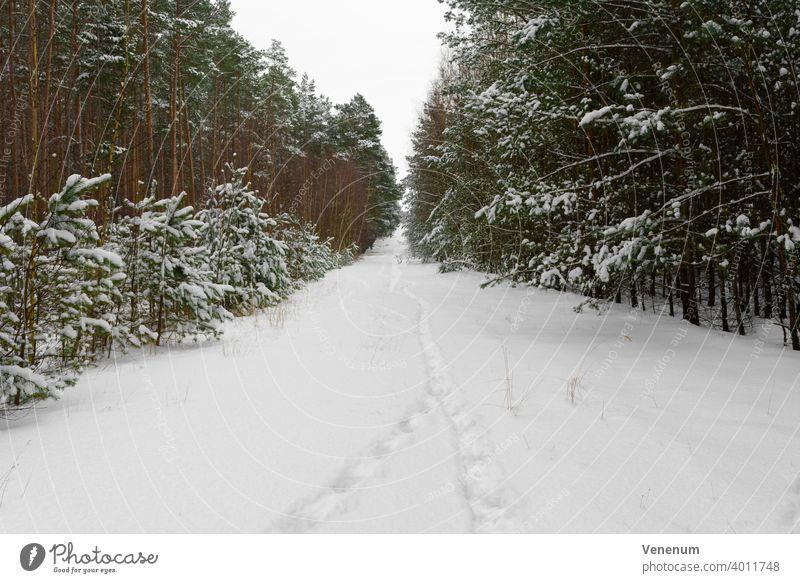 Waldweg in Deutschland im Winter mit viel Schnee, Spuren von Menschen im Schnee Schneise Wälder Baum Bäume Gras Ast Niederlassungen Natur Holzfällerei