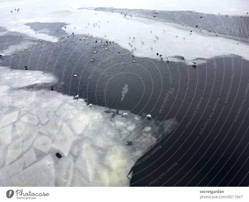 Irgendwann war das Eis gebrochen und man näherte sich an. Alster Wasser Eisscholle schwimmen Möwenvögel Enten Winter kalt gefroren Frost Außenaufnahme Farbfoto