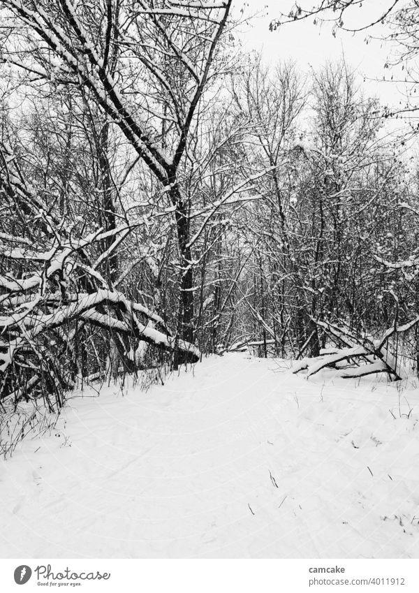 Weg im Wald mit Schnee bedeckt Ruhe Schwarzweißfoto Winter Licht Grauwert Digitalfotografie Kontrast Wege & Pfade Kontrastreich Atmosphäre schwarz Bäume zentral
