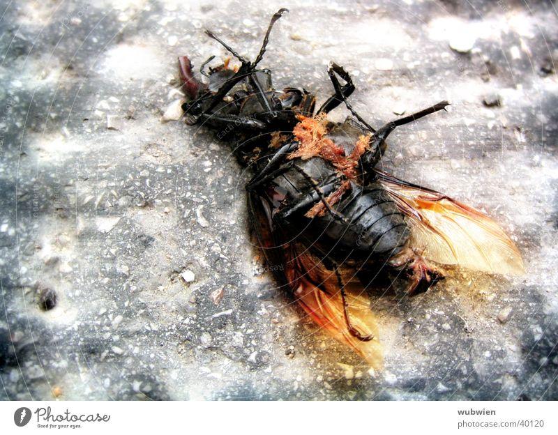 Käfer in der Stadt Tod Verkehr Bodenbelag liegen treten Stadtleben