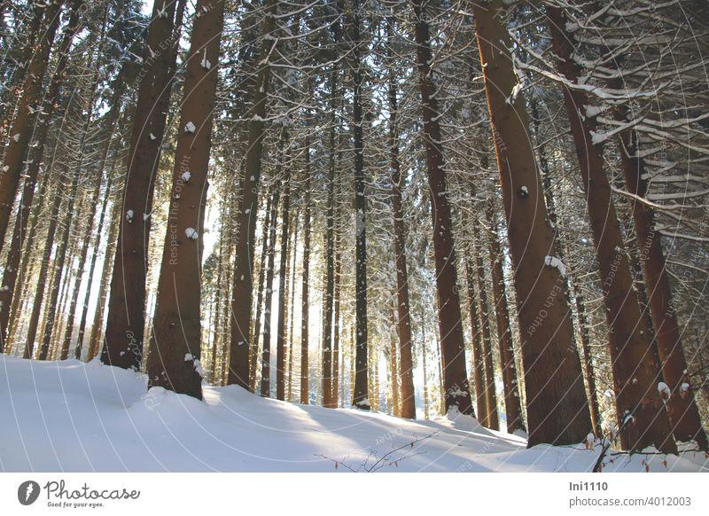 Sonnenstrahlen und Schnee im Fichtenwald schneebedeckt Winter schönes Wetter Sonnenschein Bäume kalt Winterfreude Lichtspiel verschneit Winterspaziergang