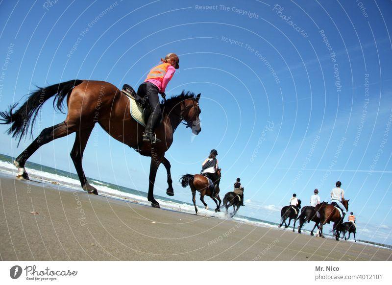 Ausritt am Strand Reiten Abenteuer Sommer Meer Landschaft Natur Umwelt Reitsport Sommerurlaub Ausflug Galopper des Jahres Pferdegangart Lebensfreude Küste