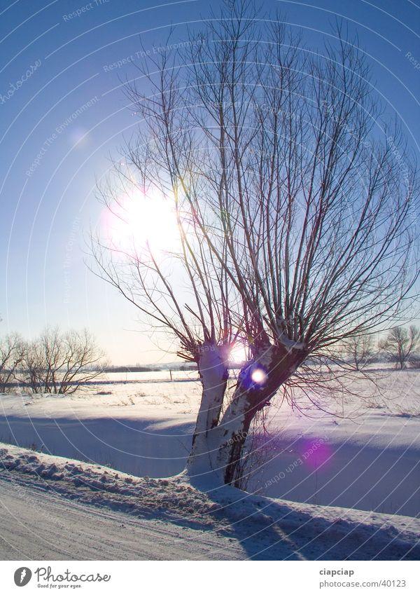 allein Baum Sonne Winter Schnee