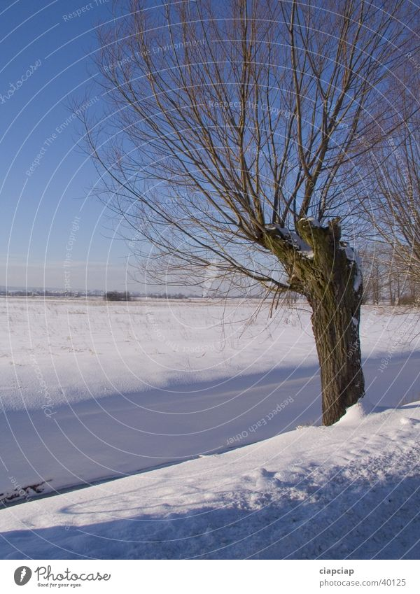 allein Baum Winter Schnee Sonne