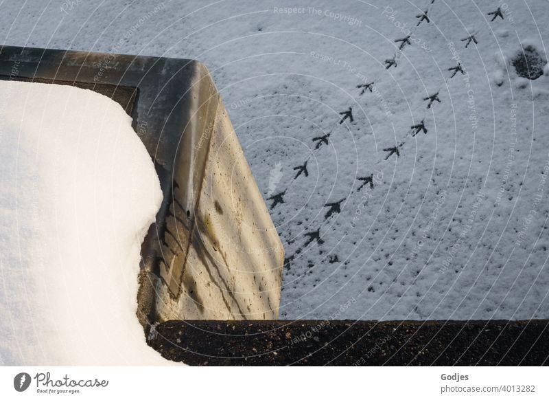 Fußabdrücke eines Vogels auf gefrorenem Fluss, Fußspuren | jetzt aber schnell ... runter vom Eis Möwe Schnee Eisfläche Winter Außenaufnahme Spuren kalt Frost