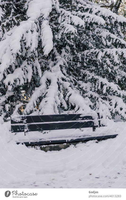 eingeschneite Bank vor einem schneebedeckten Nadelbaum Sitzgelegenheit Schnee schneebedeckter Baum Winter Menschenleer Wald Tanne Tag Farbfoto weiß Frost Eis