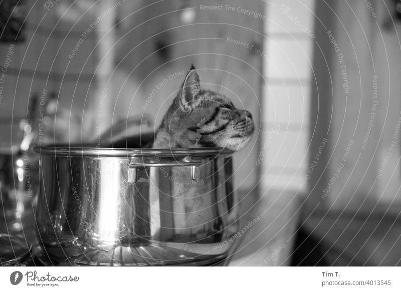 der Kater relaxt im Topf Katze Küche relaxation Tier Hauskatze niedlich Tiergesicht Schnurrhaar kuschlig Haustier Tierporträt Katzenkopf Fell Schnauze schlafen