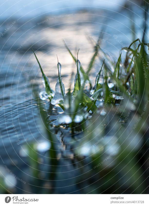 Winter Frost am Fluß - vereiste Gräser am Ufer ufer ufergras Bach Fluss Flussufer Schnee eisig natur eismantel eisig kalt Kälte Minusgrade Ammer