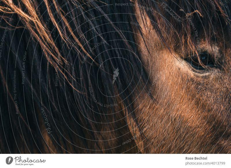 Pferdeblick Pferdeauge Nahaufnahme braun Mähne Auge Tierporträt Blick Pferdekopf Tiergesicht