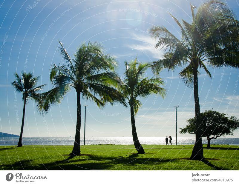 Palmen, Personen und viel Panorama Pazifik Küste Wiese exotisch Horizont tropisch Silhouette Panorama (Aussicht) Australien Gegenlicht Sonnenlicht Spaziergang