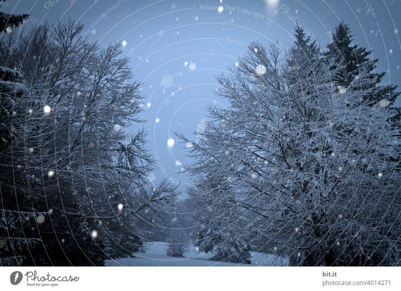 Schnee von gestern... schön Schneefall Schneelandschaft Schneeflocke Schneesturm schneebedeckt Winter kalt Baum Frost Natur Eis weiß Winterstimmung Wintertag