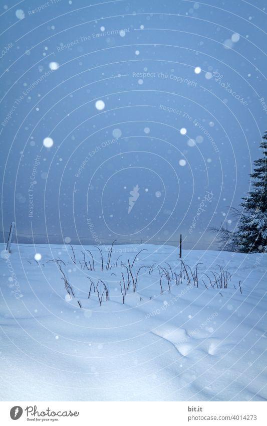 Jetzt aber schnell raus l bevor die Winterpracht vorbei ist. Schnee Schneefall Schneelandschaft Schneedecke Schneeflocke kalt Frost Eis Natur weiß
