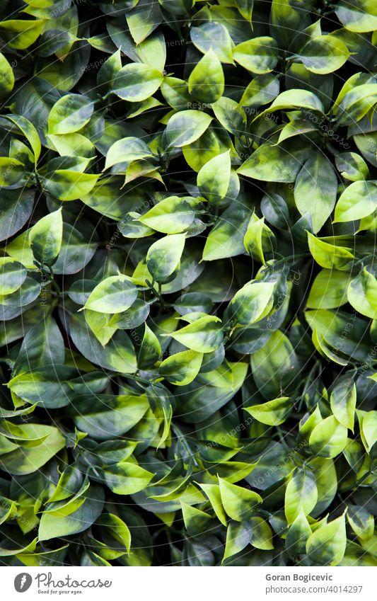 Textur von Efeublättern Großaufnahme grün natürlich Natur Nahaufnahme Pflanze Garten Muster Blätter Tapete Laubwerk Umwelt Hintergrund Blatt Ökologie Sommer