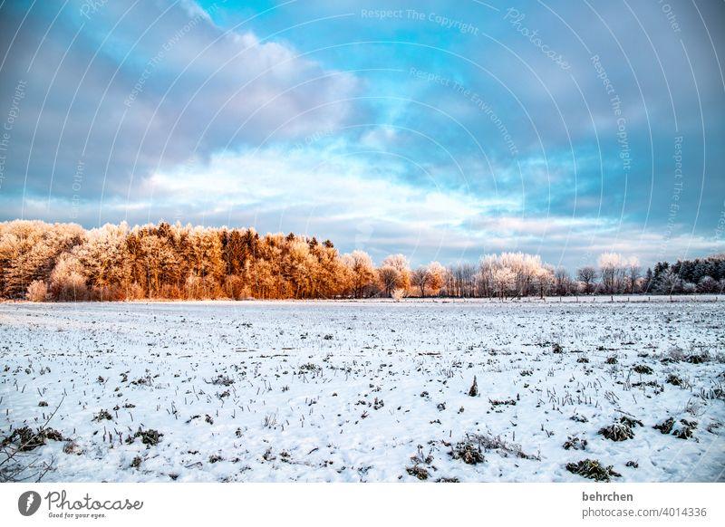 vorausschauend Herbst Wald Winterwald Märchenwald Äste und Zweige Klima traumhaft schön verträumt idyllisch Schneedecke Schneelandschaft Heimat Acker