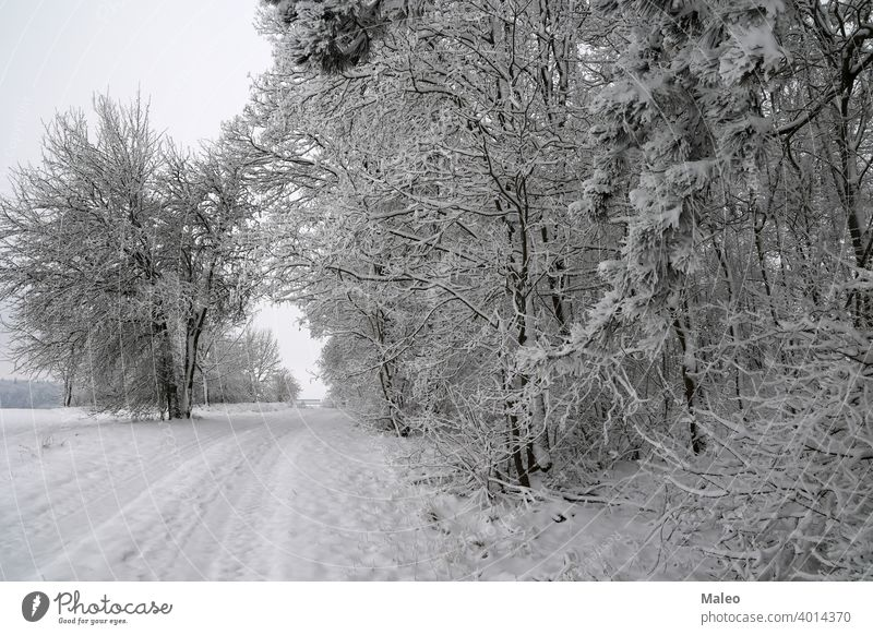 Frischer weißer Schnee liegt auf den Ästen der Büsche und Bäume. Tag cool gefroren Ansicht Wetter im Freien Eis schön Niederlassungen hell Knospen Buchse