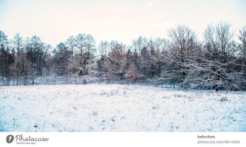 schneeig Farbfoto Winterwald Wintertag Schneedecke geheimnisvoll Nebel idyllisch Winterstimmung verträumt Heimat schön träumen Äste und Zweige Klima traumhaft