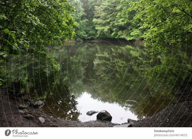 grüner stiller Waldsee mit Spiegelung Spiegelung im Wasser Sommer Reflexion & Spiegelung See ruhig Seeufer Wasseroberfläche Wasserspiegelung Idylle Bäume Stein