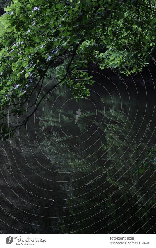 belaubter Baumzweig über einen grünen See, in dem sich Bäume spiegeln Waldsee Spiegelung Ast Äste Äste und Zweige Stille Wasseroberfläche Reflexion & Spiegelung