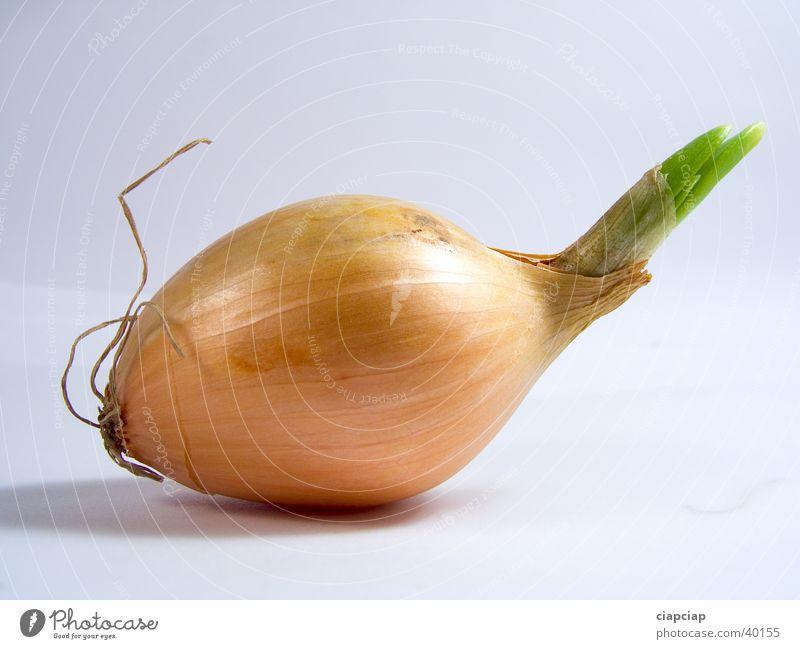 Zwiebel Gemüse