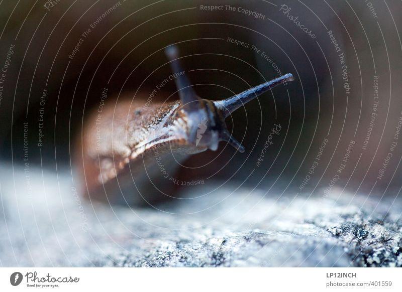 le Schnecke Sommer Garten Tier 1 Blick Ekel Freundlichkeit klein nackt Natur langsam Fühler Nacktschnecken Umwelt krabbeln Schleim schleimig Spuren Schleimspur