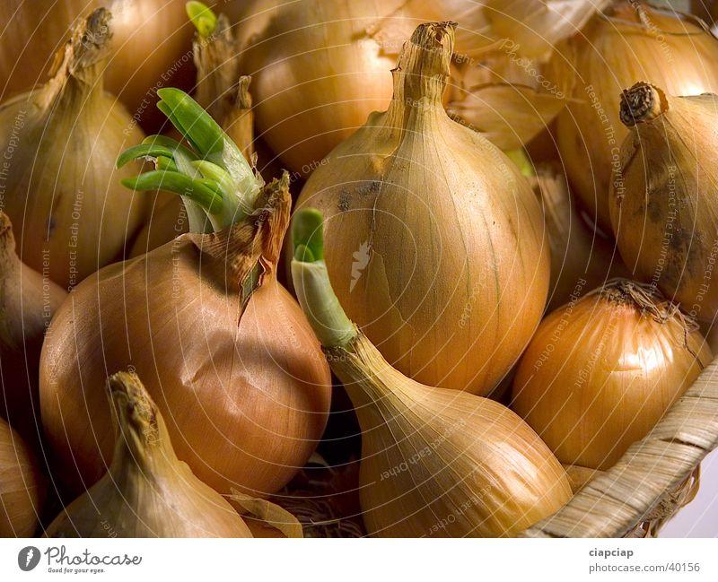 Zwiebel onion Gemüse obiekt cebula