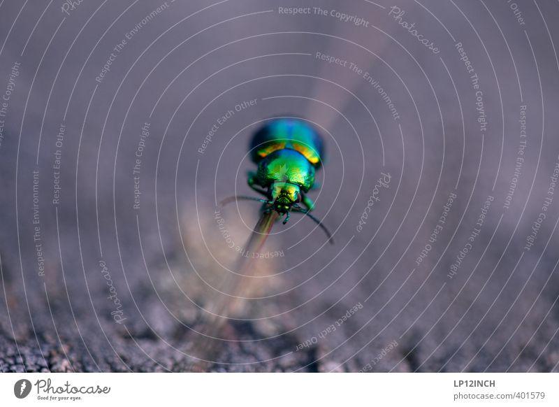 NEON Käfer 1 Tier Sport außergewöhnlich grün Bewegung elegant Kontrolle Leichtigkeit Natur Präzision Ziel Insekt Fühler krabbeln neonfarbig Farbfoto