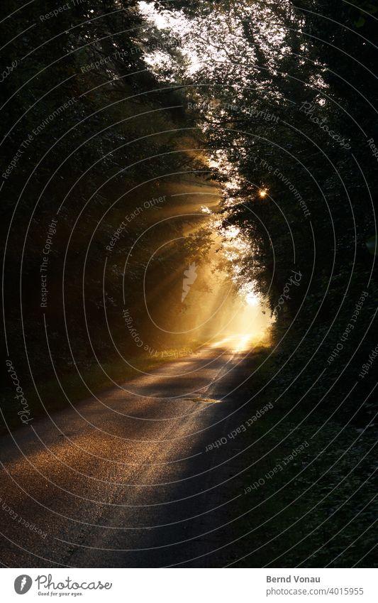 Morgensonne Wege & Pfade Sonnenlicht sonnestrahlen Sonnenstrahlen schön Glaube Hoffnung Asphalt Wald gelb grau Silhouette Sommer Wärme Richtung Strahlen Bäume
