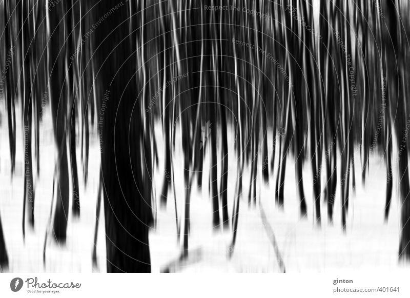 Winterwald abstrakt Natur weiß Pflanze Baum Landschaft schwarz Wald Umwelt dunkel kalt Schnee natürlich hell Urelemente Symmetrie