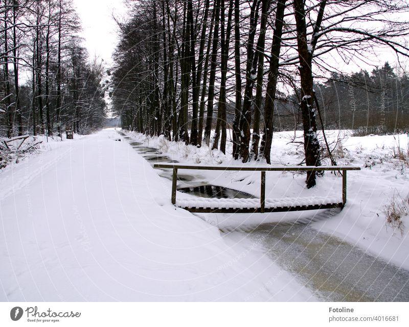 Eingeschneit sind Wege, Bäche, Brücken und Wälder. Winterlandschaft Schnee weiß kalt Natur Landschaft Schneelandschaft Winterstimmung Wintertag Baum Frost