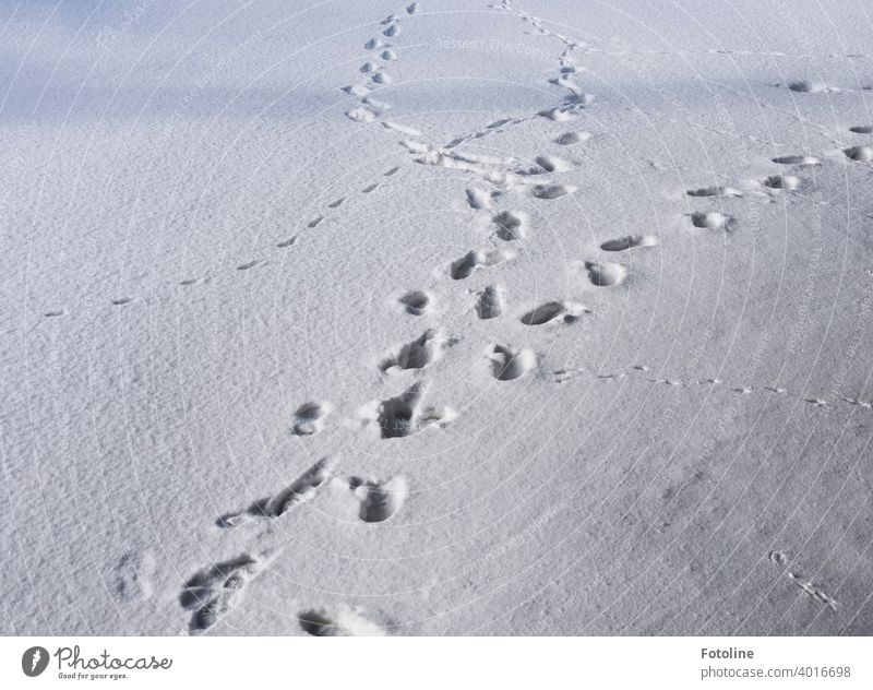 Spuren im Schnee VI. Vöglein, Katzen, Mäuse und Fotoline. Alle hinterließen ihre Fußabdrücke im Schnee. Schneedecke Fußspuren Winter kalt Schneespur weiß