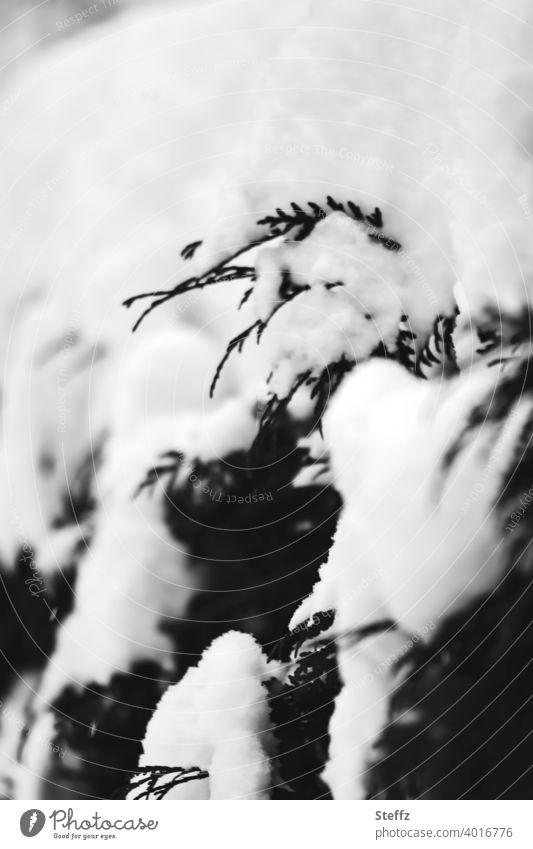 Thujahecke im Schnee Hecke Schneedecke Februar schneebedeckt Schneekappe verschneit Winterkälte Wintereinbruch Wintertag Jahreszeiten Kälteeinbruch Kontrast