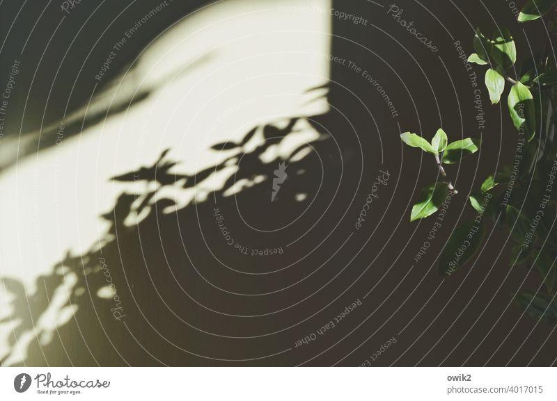 Hängende Gärten Pflanze Blätter Menschenleer Farbfoto Strukturen & Formen Sträucher Schönes Wetter Nahaufnahme Detailaufnahme hängen Textfreiraum links