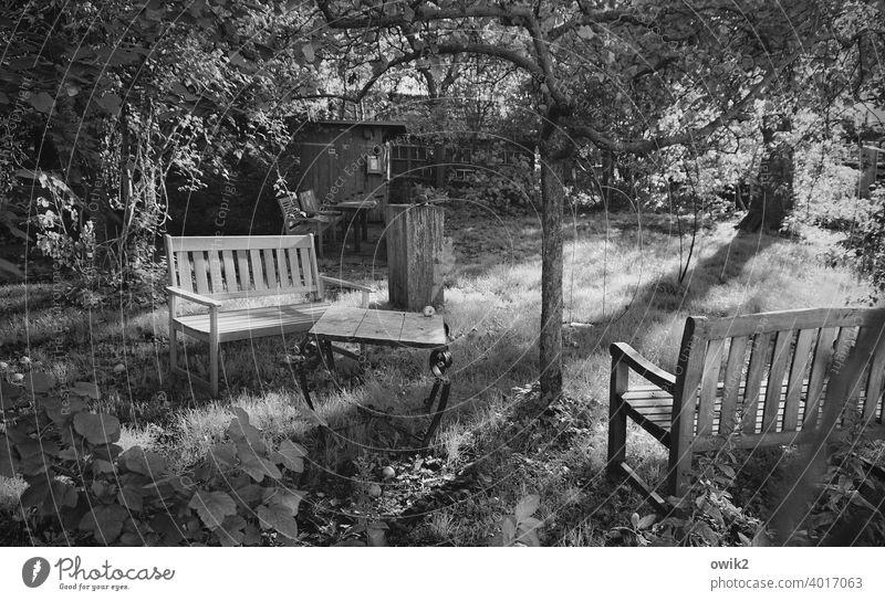 Geheimnisgarten Garten Idylle Gras Baum Bänke Gartentisch friedlich Sonnenlicht Wiese Tisch Herbst Außenaufnahme knorrig Baumstamm Sträucher Menschenleer Natur