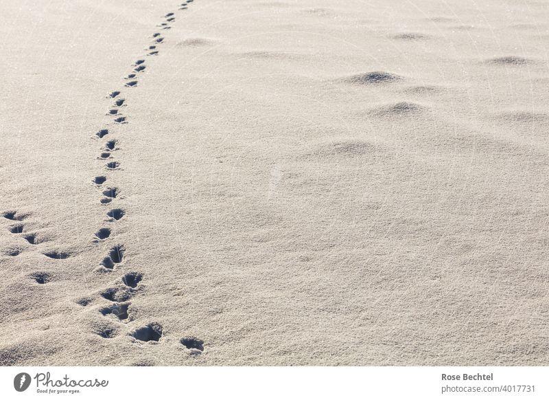 Spuren und Maulwurfshügel im Schnee Fährte Winter weiß Menschenleer Schneespur Natur Schneedecke Außenaufnahme Wege & Pfade kalt Tag Farbfoto Schneelandschaft