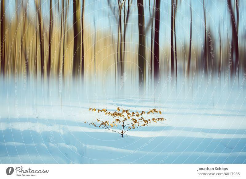 Busch im Schnee vor Winterwald mit Bewegungsunschärfe Blätter Februar Jahreszeit Muster Schatten Wald abstrakt bewegungsunschärfe experimentell kalt Baum Natur