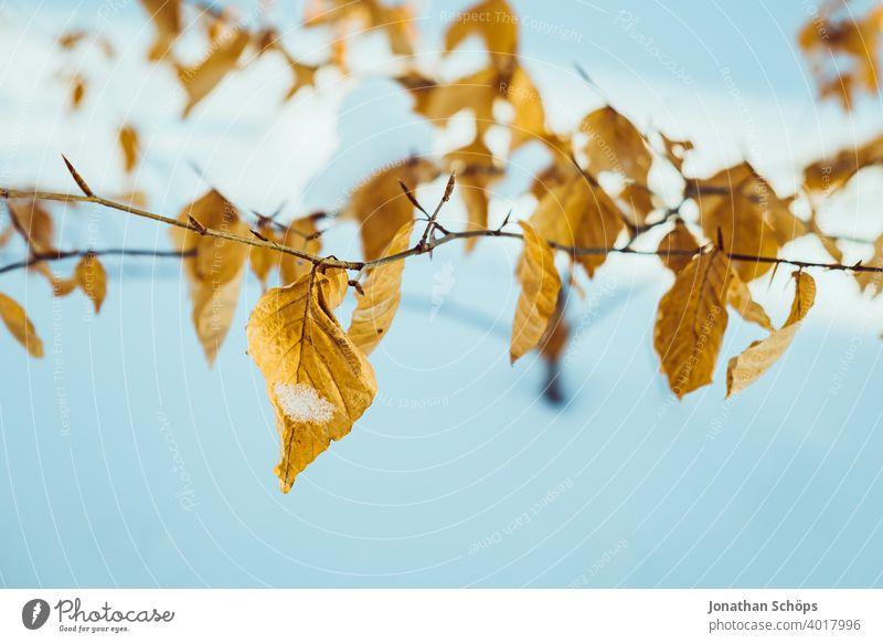 braune Blätter vom Busch im Winter bei Schnee im Wald Februar Jahreszeit Laube Nahaufnahme Winterwald kalt Baum Natur weiß Winterstimmung Außenaufnahme