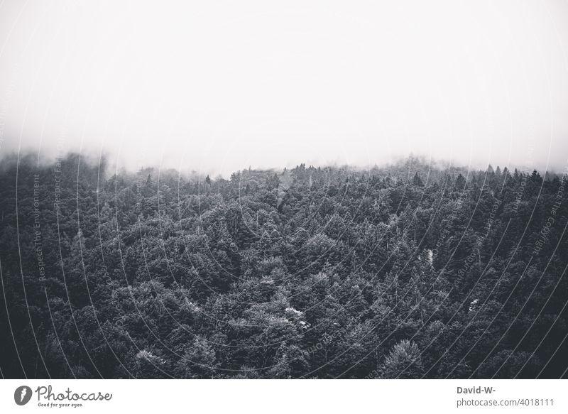 Wald verschwindet im Nebel dunkel verschlucken Nebelschleier Nebelbank düster gruselig Bäume Nebelwald Landschaft Nebelwand