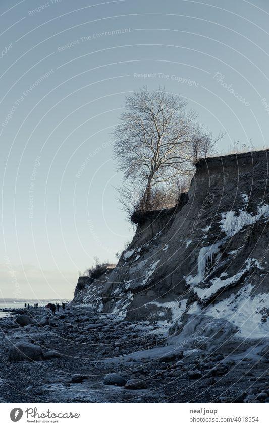 Blick entlang einer Steilküste an deren Klippe ein einzelner Baum steht Außenaufnahme Natur Landschaft Küste Meer Ostsee Zentralperspektive Winter Eis Kontrast