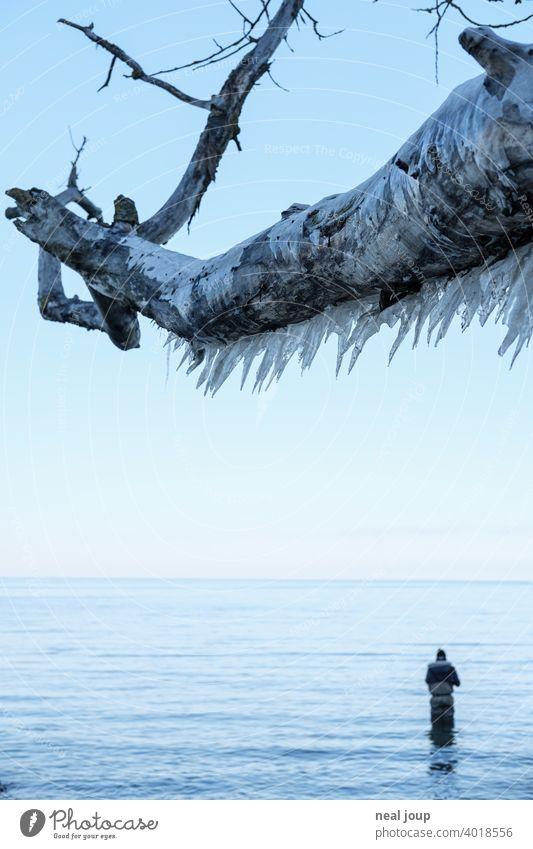 Dicker Ast voller Eiszapfen ragt über die stille winterliche Ostsee in der ein Angler sein Glück versucht Außenaufnahme Natur Landschaft Küste Meer Steilküste