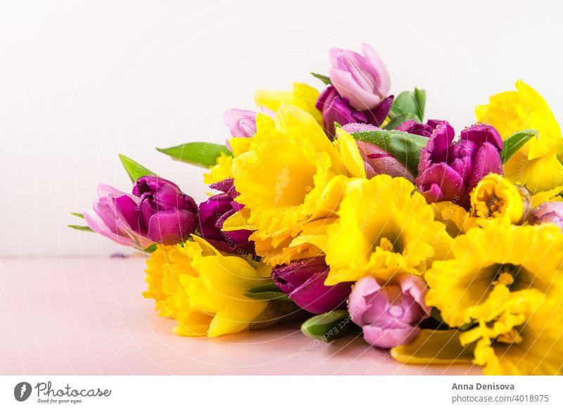 Schöne Bunch von Tulpen und gelben Narzissen auf dem rosa Backg Tag Haufen Blume Blumenstrauß purpur Pfingstrose Natur Frühling grün Muttertag 8. März schön