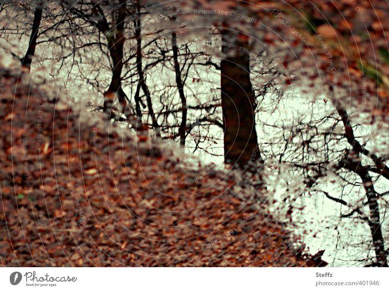 die Zeiten kommen Natur schön Baum Blatt ruhig Wald Herbst braun Stimmung Vergänglichkeit Wandel & Veränderung Zweig Herbstlaub Bach herbstlich verträumt