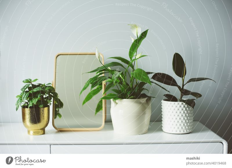Trendiges modernes skandinavisches Interieur in Weiß- und Grautönen, dekoriert mit Zimmerpflanzen und Kerzen. Einfaches Wohnen und Hygge-Konzept heimwärts