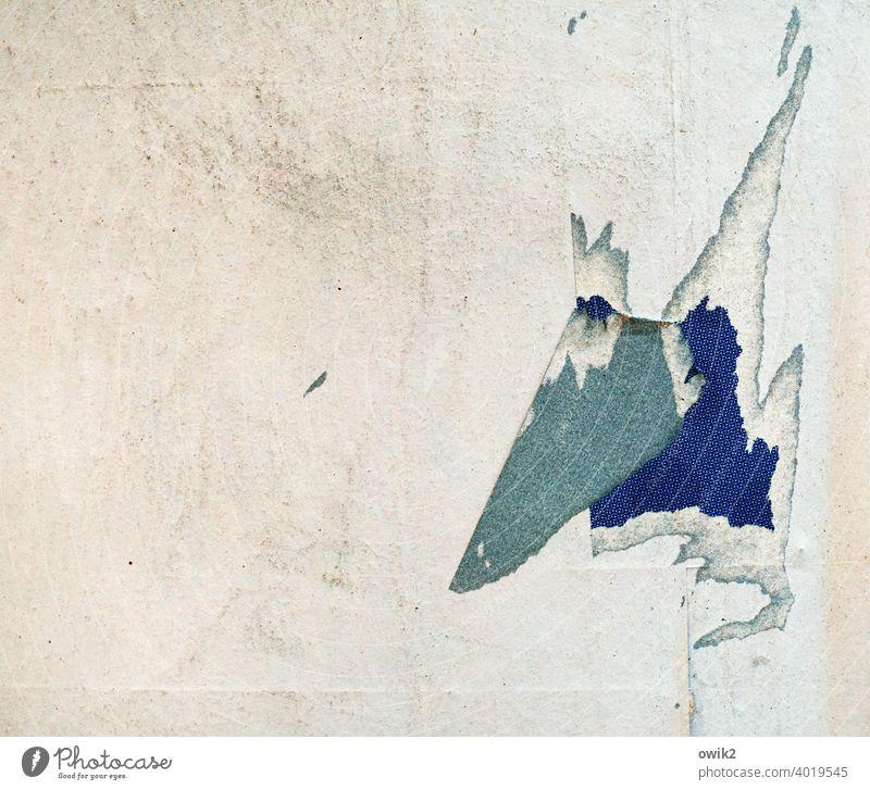 König Ohneplan Litfaßsäule Papier Kopf Nase Zufall hängen Zahn der Zeit Farbfoto Außenaufnahme Detailaufnahme Nahaufnahme kaputt Strukturen & Formen Muster
