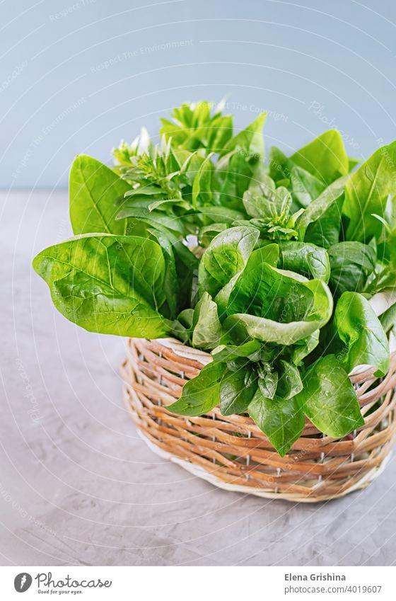 Frischer grüner Spinat Blätter in einem Weidenkorb platziert. Gesundes veganes Essen Konzept. Nahaufnahme. Korb vertikal frisch organisch Ernte Blatt Vegetarier