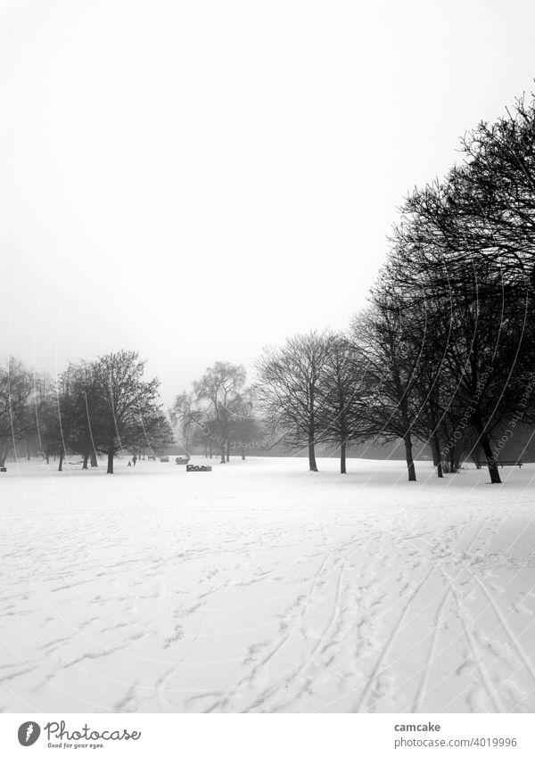 Fußabdrücke im Park mit Bäumen im Schnee idyllisch niemand Winterstimmung Naturliebe Außenaufnahme Windstille Menschenleer weiß schwarz Atmosphäre Kontrastreich