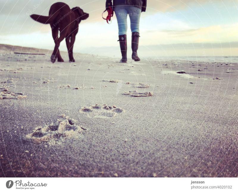 Strandspaziergang mit Hund Labrador Labrador Retriever braun Pfotenabdruck Spuren spuren im sand spuren hinterlassen Nordsee Nordseeküste Sand Frau Frauenbein