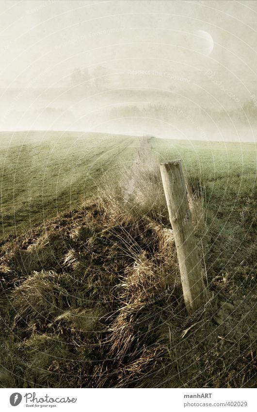 Morgenwacht Natur Baum Erholung Landschaft Umwelt Wiese Gefühle Herbst Traurigkeit träumen Wetter Feld sitzen Nebel Erde laufen