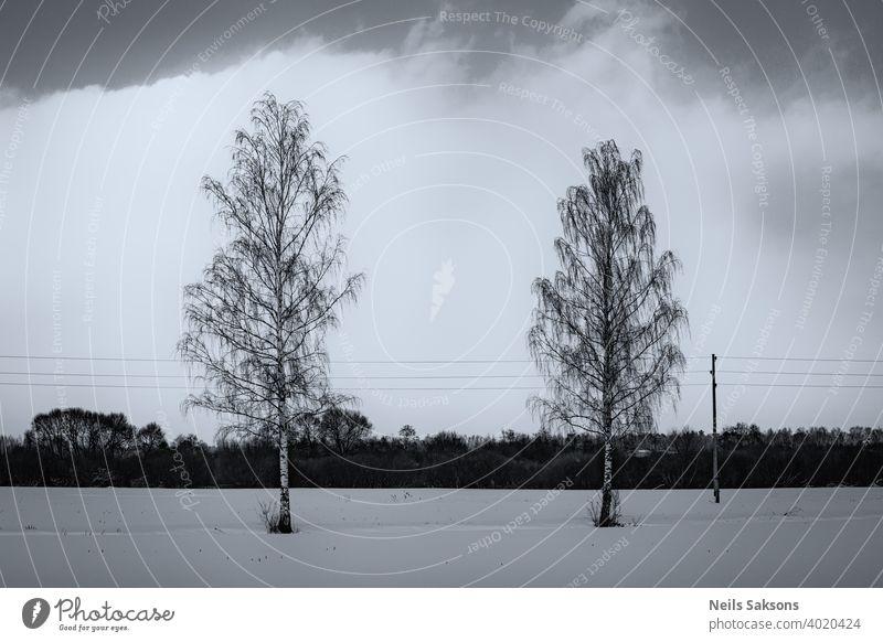 zwei Birken und Stromleitung, große weiße Wolke im Hintergrund, nördliche Winterlandschaft in Lettland Schnee Landschaft Natur Wald Himmel Bäume Wasser Baum